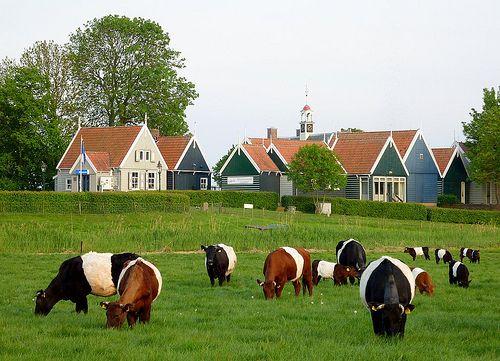 Schokland is een voormalig eiland dat nu is opgenomen in de Noordoostpolder. De contouren van het eiland zijn nog zichtbaar in het landschap. (1987)