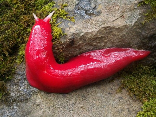 Pink Slug. Would make a lovely coordinating pet in a little girls room.