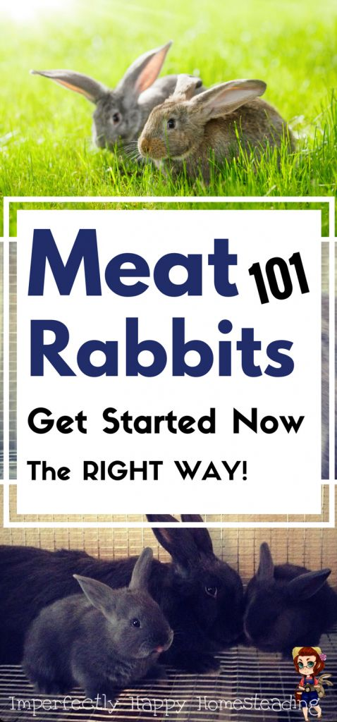 Getting Started with Meat Rabbits - everything you need to know. The perfect livestock for backyard farmers and urban homesteads!