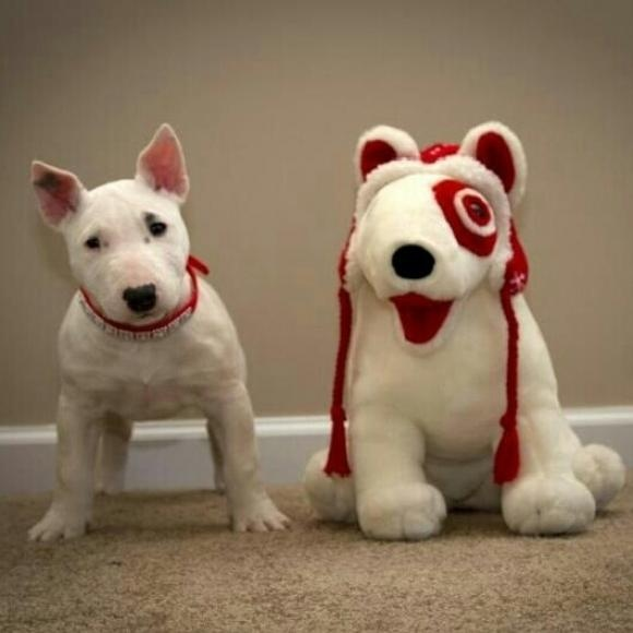 45 best spot the target dog images on pinterest english What kind of dog is the target mascot