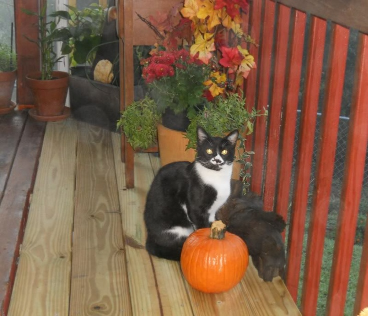 Dixie loves pumpkins :-) http://petsnchallenges.spruz.com/: