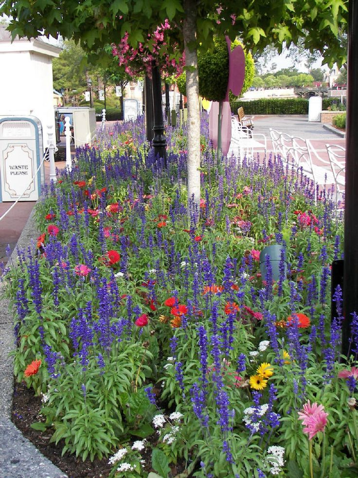 Salvia farinacea - Google Search