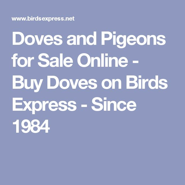 Doves and Pigeons for Sale Online - Buy Doves on Birds Express - Since 1984