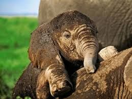 Image result for free wildlife wallpapers