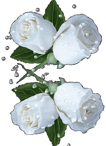 white roses gif