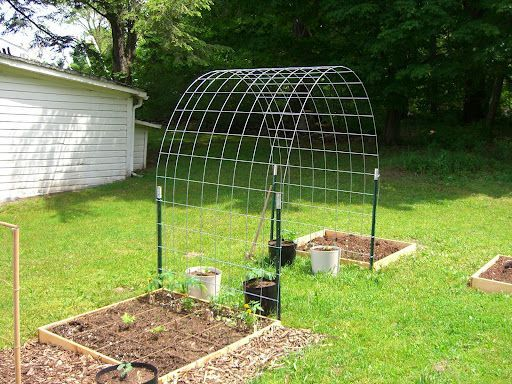 what a good idea.  your own inexpensive vine trellis.  would look cute in a corner of your yard with a bird bath underneath