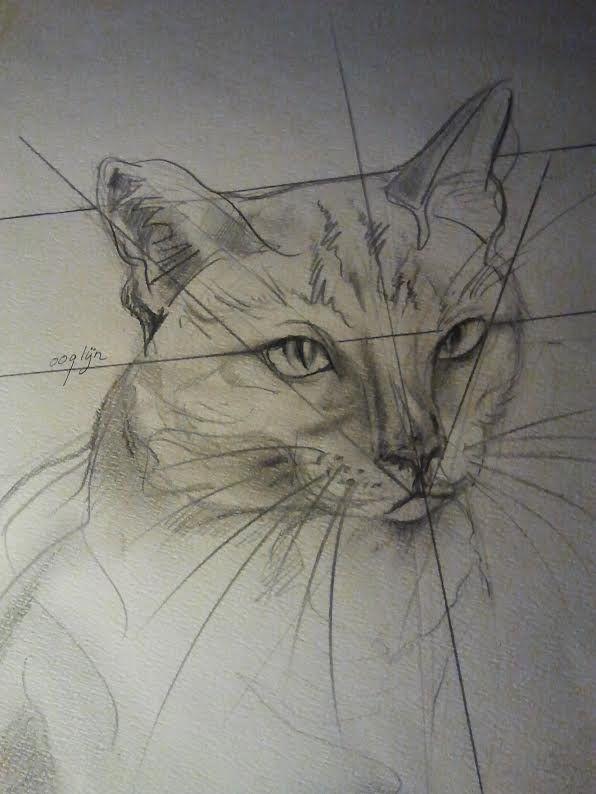 Hoe teken je een kat / dieren tekenen / #2