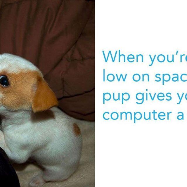 Funny Dog Memes Clean Funny Dog Memes 2018 Dog Meme Face Cute Dog Memes Dog Memes Best Dog Memes Funny Dog Memes Funny Dogs Dog Memes