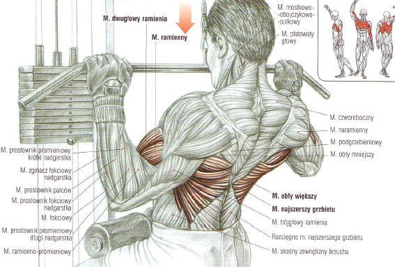 ćwiczenia na plecy - Szukaj w Google