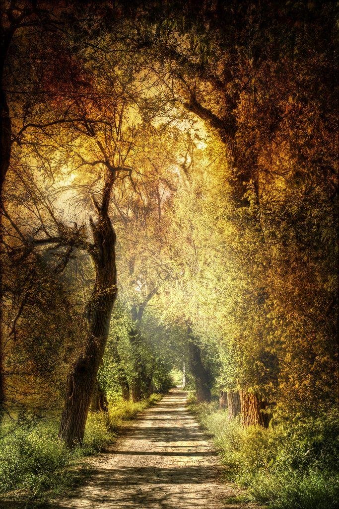 https://flic.kr/p/8f7Jb2   Mystic path. Sendero mistico.