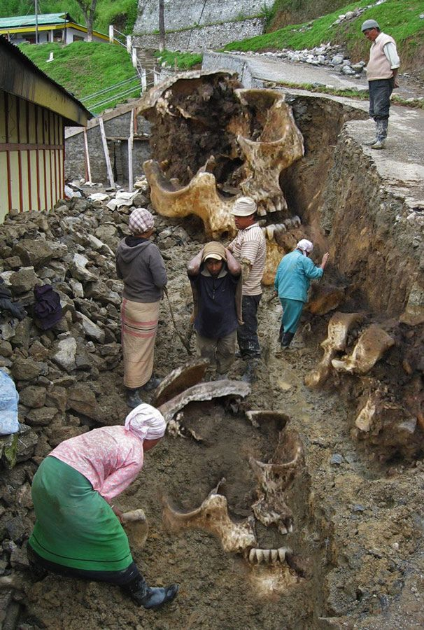 Other giant skull discovery in Pitcairn islands.