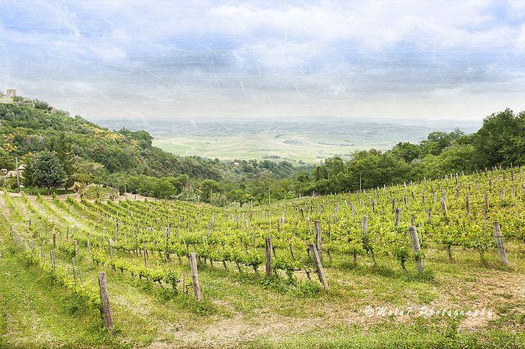 Italy Photography, Tuscany Print, Montalcino, Autumn Season Photo, Vineyards Image, Grape Harvest, Travel, Italy Decor di Molo7Photography su Etsy