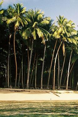 #palms #beach #ocean