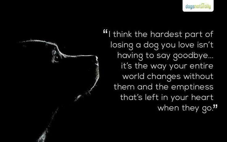 Losing any pet is an empty feeling.