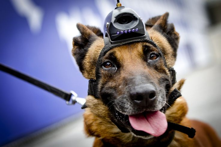 WATCHDOG! With the upcoming Nuclear Summit in the Hague, the Dutch police are fitting dogs with videocam's and wireless connections. A clever but also a somewhat terrifying notion..