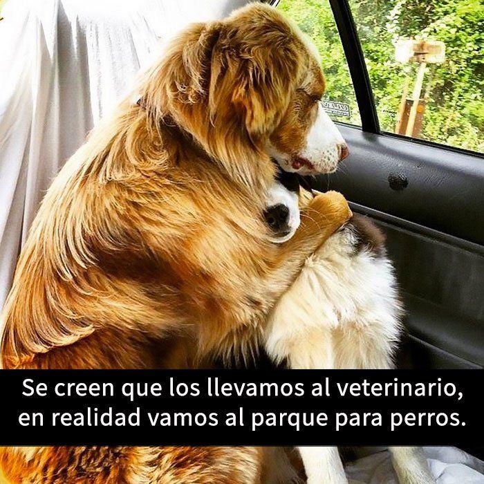 Soluciones Para Mascotas #animallovers #pets #animals #perros #mascotas