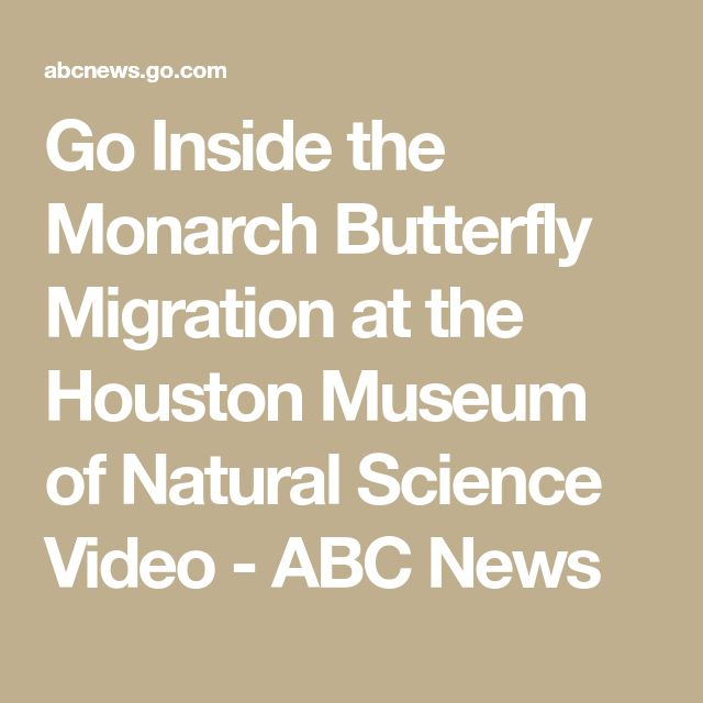 Go Inside the Monarch Butterfly Migration at the Houston Museum of Natural Science Video - ABC News