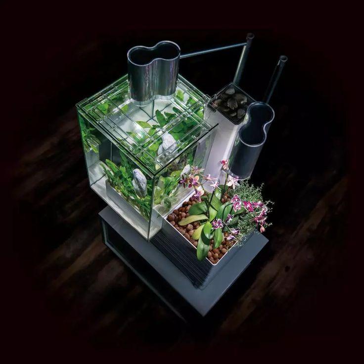 水槽内でアクアリウムも楽しめて、室内ガーデニングもできる。一石二鳥のアクアポニックスのアイデア