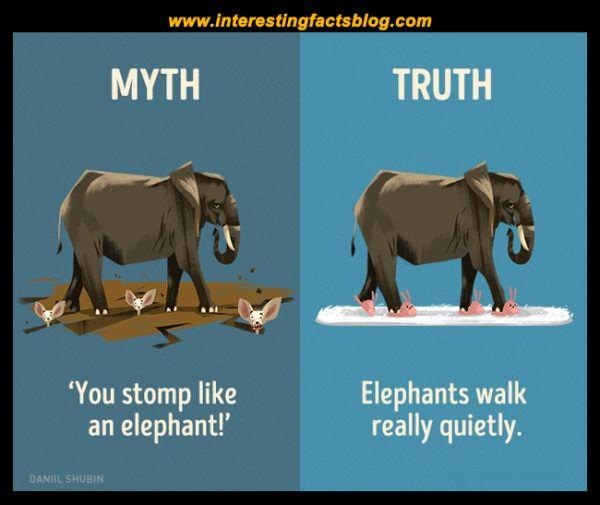 Myths About Elephants
