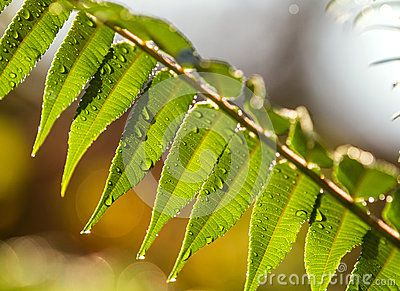 Leaves with drops of water. bokeh Autumn colours background. Can be used as…