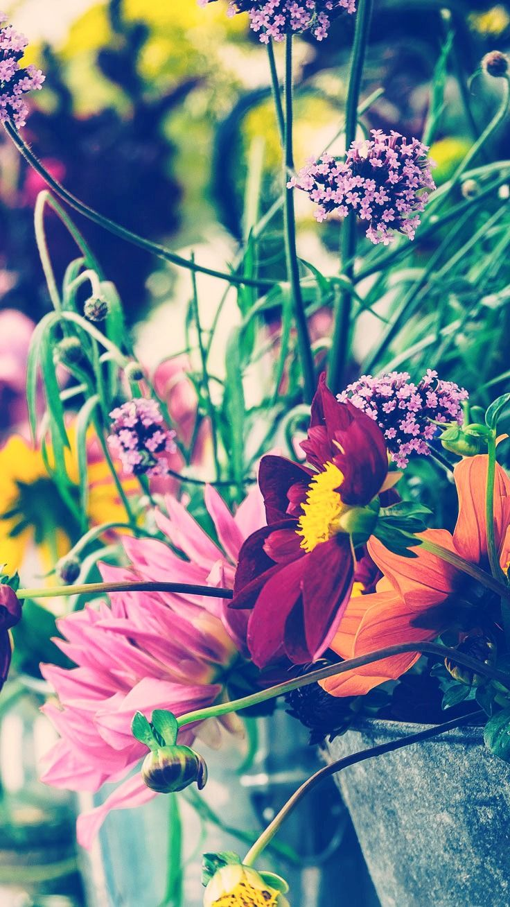 Best 25+ Spring wallpaper ideas on Pinterest | Screensaver, Iphone backgrounds tumblr and Pretty ...