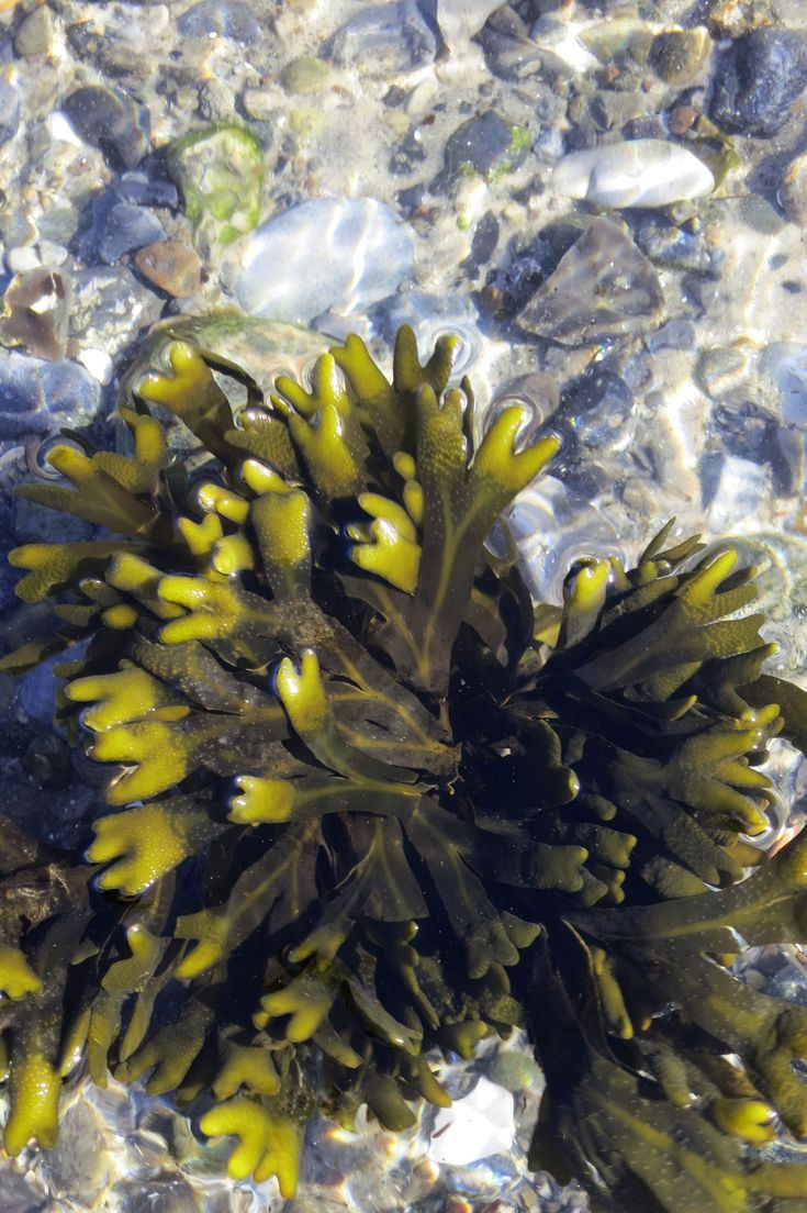 Terroir Project - Seaweed and paper 2014