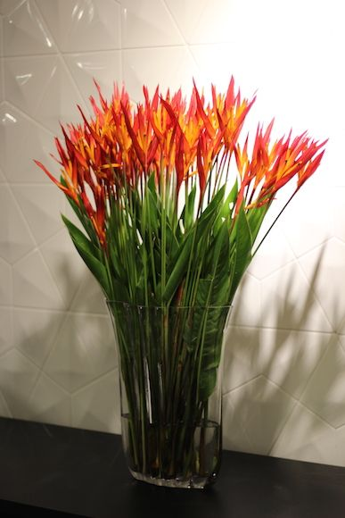 Arranjo de flores tropicais: Heliconia
