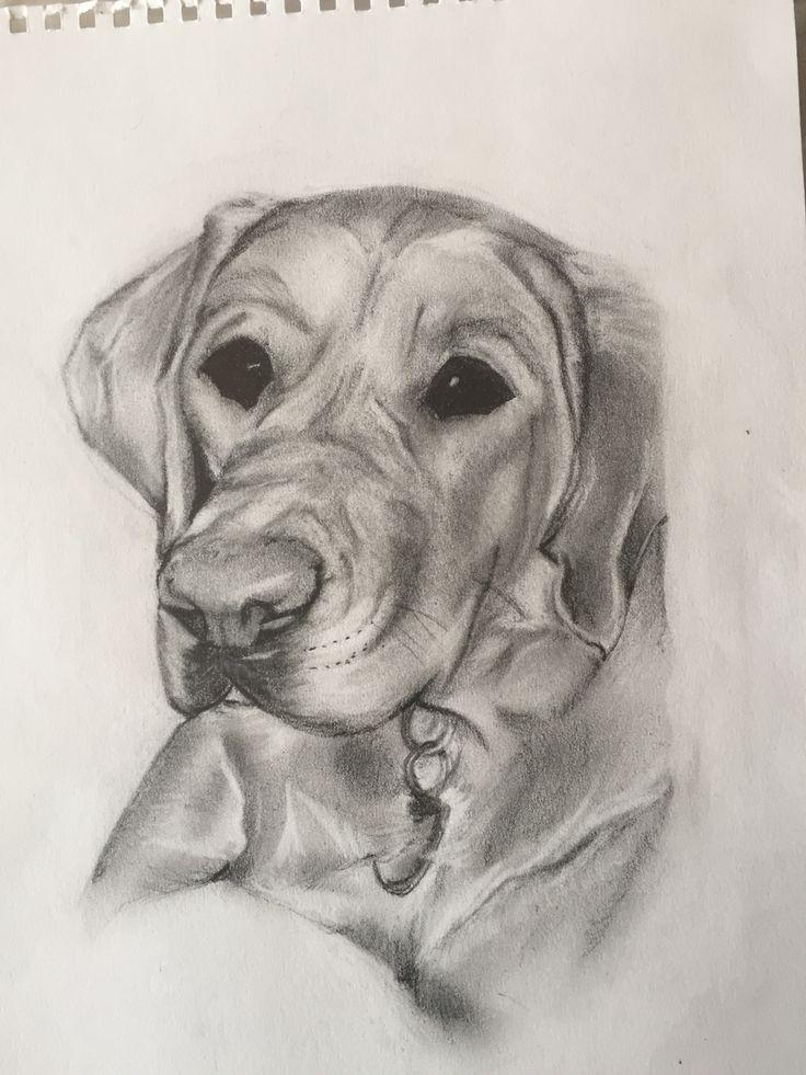 Eddie - an ex guide dog puppy
