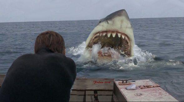 Jaws artwork by Federico Alain | Great white shark, Shark photos, Shark