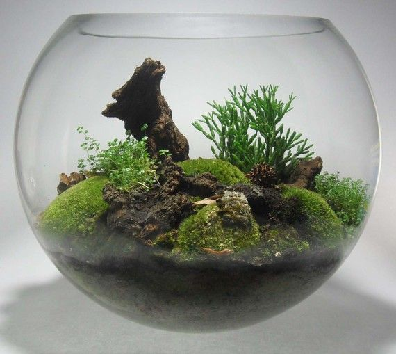 Fish Bowl Terrarium T E R R A R I U M S Pinterest Awesome Glasses And Centerpieces