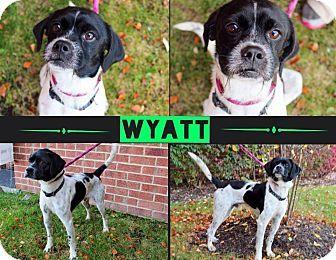 Garden City, MI - Pointer/Pug Mix. Meet Wyatt, a dog for adoption. http://www.adoptapet.com/pet/11819740-garden-city-michigan-pointer-mix