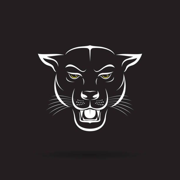Vector Of An Angry Panther Head On Black Background Wild Animals Panther Art Black Panther Drawing Wild Animals Vector