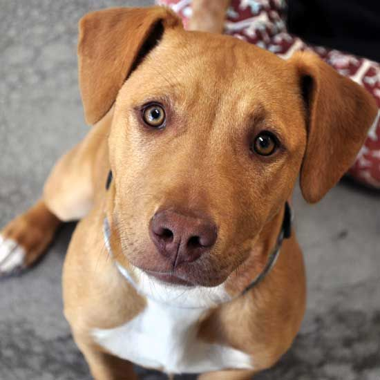 Dogs That Need To Be Adopted Near Me