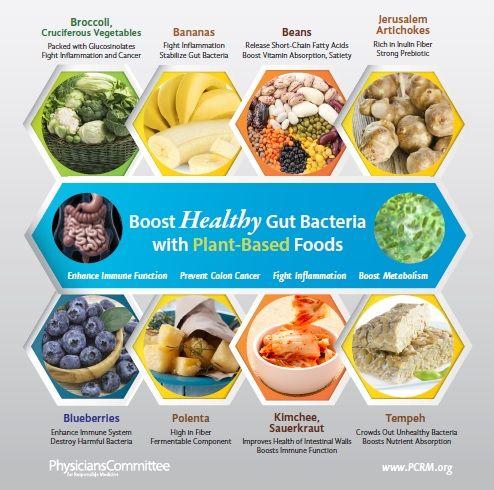 Pflanzliche Lebensmittel für eine gesunde Darmflora
