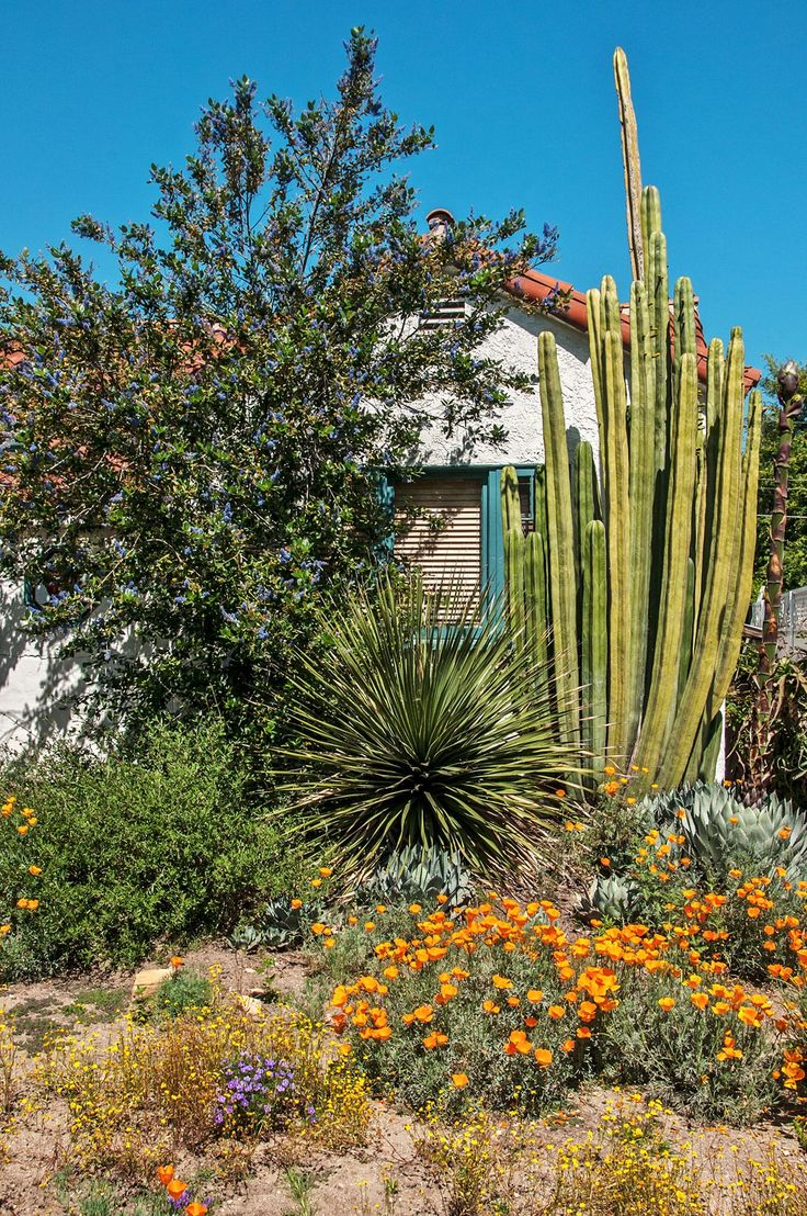 Garden 30 in La Canada Flintridge | Theodore Payne Native Plant Garden Tour