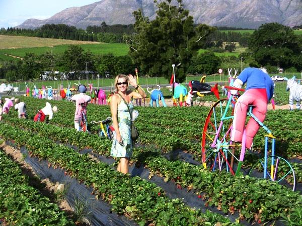 Strawberry Picking, Mooiberge Farm, Stellenbosch