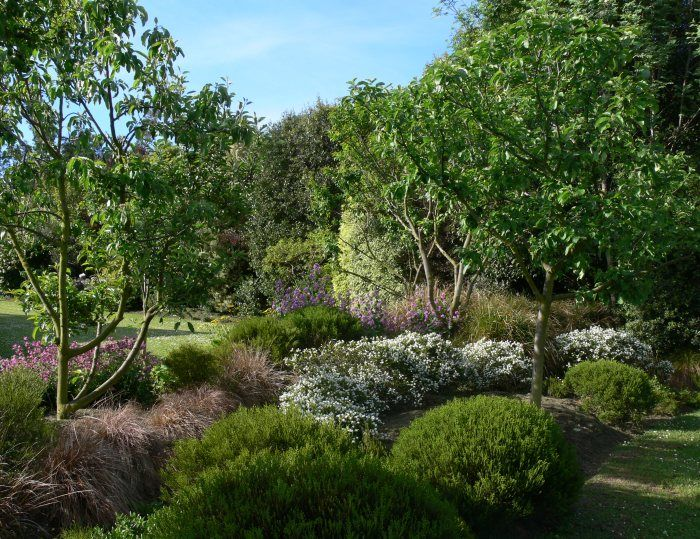 good example of low NZ plants with a few trees (Garden