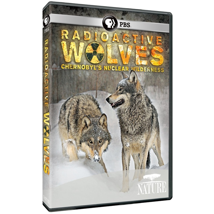 """NATURE : RADIOACTIVE WOLVES - CHERNOBYL'S NUCLEAR WILDERNESS - this is a beautiful documentary (almost brought a tear to my eye.) It focuses on the wolves in """"the zone,"""" but also shows the other wildlife existing there. Absolutely beautiful and gives me hope for the future."""