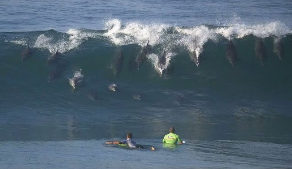 dolphin surf: San Diego, Surfing Dolphins, Funny Pictures, Surfing Up, Byron Bays, Surfsup, Dolphins Surfing, The Waves, Sandiego