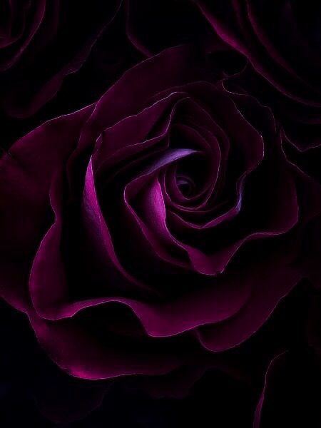 27 best deep magenta images on pinterest magenta aubergine colour and deep - Dark magenta wallpaper ...