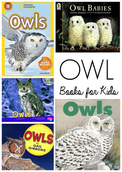 owl essay for kids The kiboomers owl nursery rhyme lyrics ★get this song on itunes: watch our 'owl song.