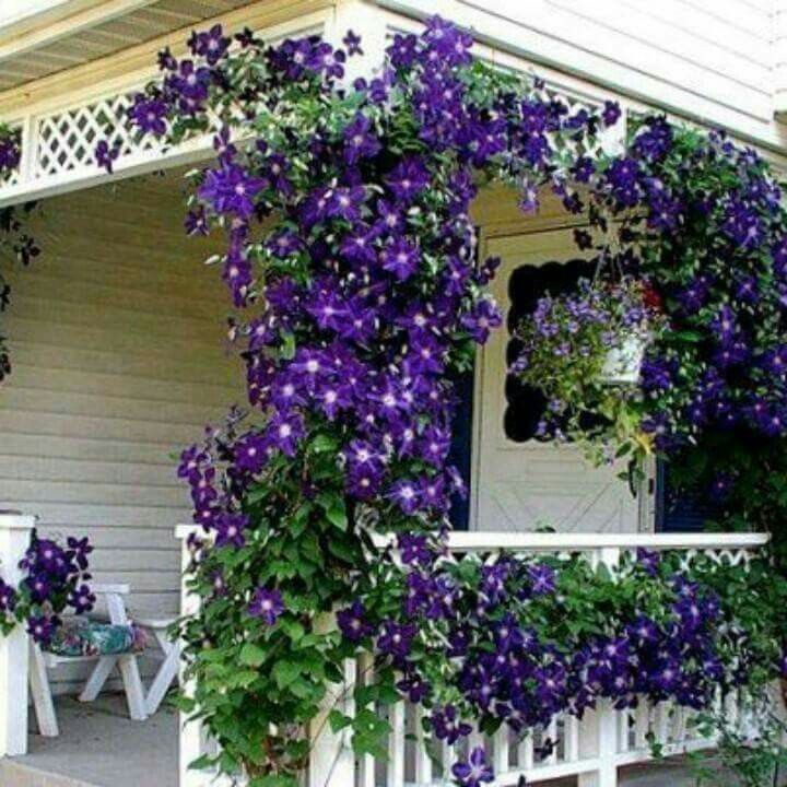 396 migliori immagini porch veranda balcony deck for Disegni portico anteriore per case in stile ranch