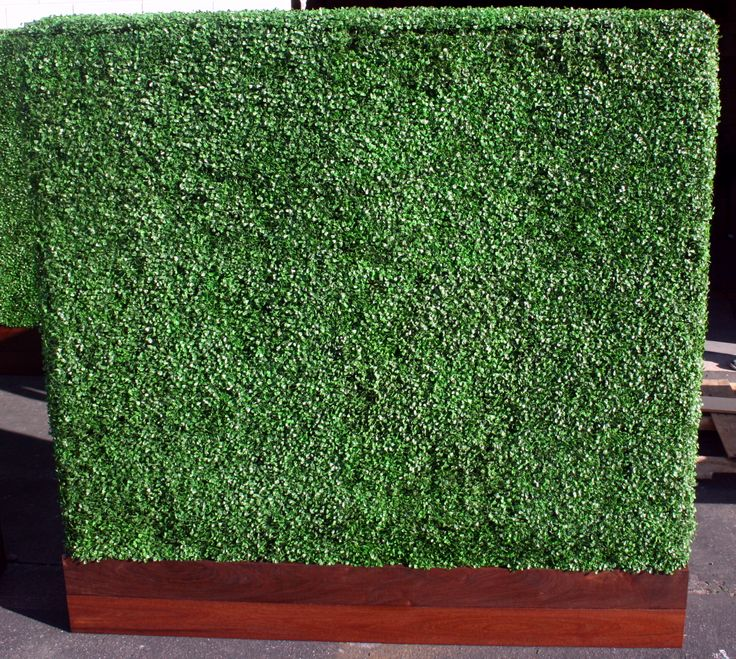 Pin On Faux Hedges Amp Walls
