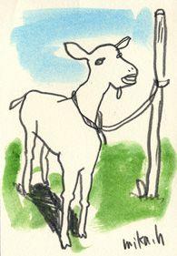 いたるところでヤギに遭遇します。  かわいいのだけれど  いずれヒージャー汁(ヤギ汁)になるのかと思うと  ちょっと複雑です。