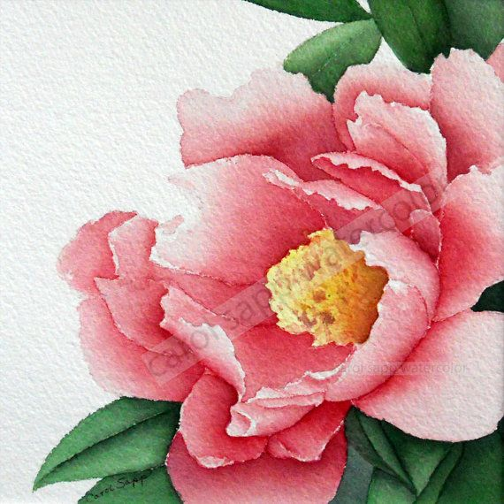 "rose peony watercolor flower painting 12"" x 12"" archival print by Carol Sapp"