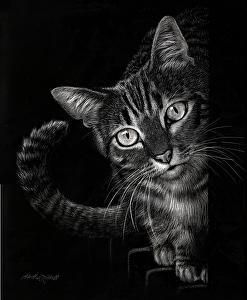 Curious By Heather A Mitchell Scratchboard 14 X 11 Inverzni