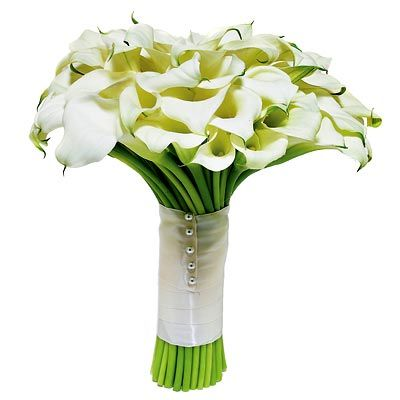 calla lily bouquet: White Flowers, Calla Lilies, Flowers Colors, Tuileri Flowers, Calla Lilly, Lilies Bouquets, Colors Instyle, Minis Calla, Winter Flowers