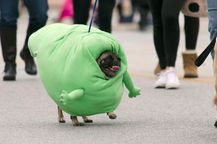Slimer costume for pug