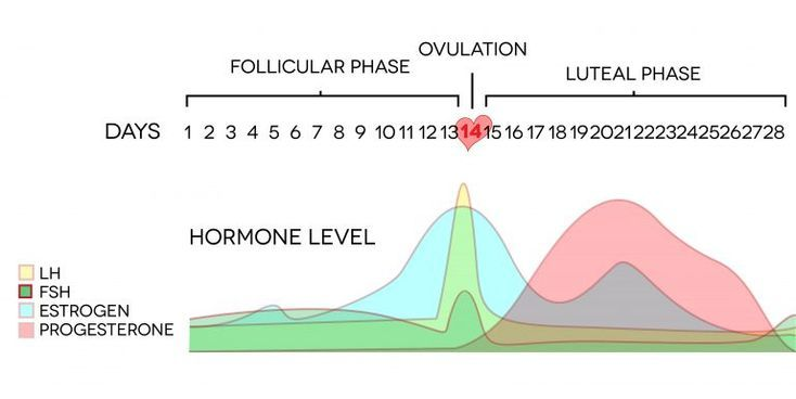 Symptoms of Low Progesterone (and what to do about it