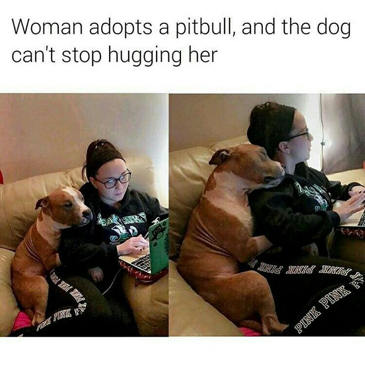 Looks like my fur baby. Just hasn't stopped cuddling since we adopted her. She is not a small dog.